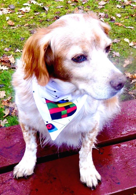 Hundebandana Miro